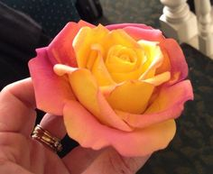 Just Playing!!! Yellow and Pink Gum Paste Rose - Cake by Lisa Templeton