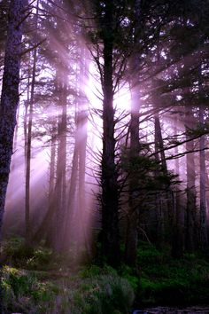 violet rays in a forest of trees Photos Du, Cool Photos, Beautiful World, Beautiful Places, Enchanted, Surfer, Purple Haze, Belle Photo, Amazing Nature