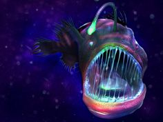 The deep sea dwelling Angler Fish