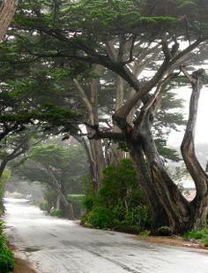 Cypress Trees in Carmel, California - Photo by Linda Yvonne