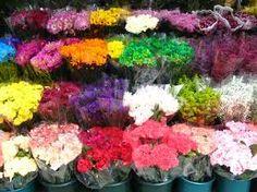 flowers Beautiful Flower Arrangements, Most Beautiful Flowers, Pretty Flowers, Bloom, Creative, Plants, Inspiration, Trends, News