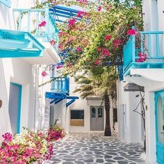 """Atikka Apparel az Instagramon: """"What's your favorite holiday destination? One of our top faves would have to be the beautiful Santorini 💙 #holidays #summer…"""" Favorite Holiday, Your Favorite, Santorini Holidays, Holiday Destinations, Plants, Summer, Top, Beautiful, Summer Recipes"""