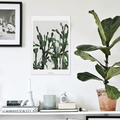 vontrueba - green on the wall