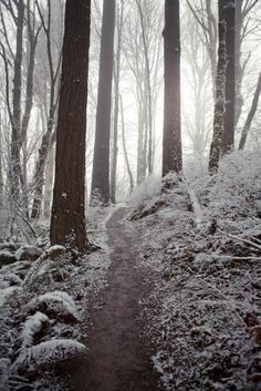 snowy day, Portland Oregon.  Photo: Jim Golden