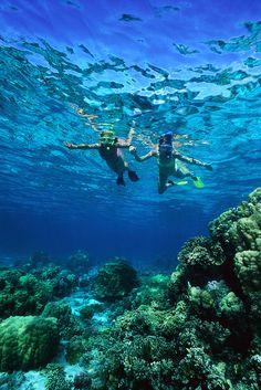 Snorkeling over an Aruba Reef