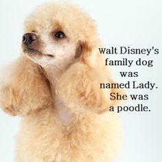 Fact about Walt Disney's dog!
