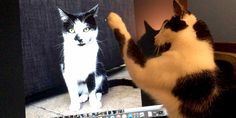 How Social Media Can Enhance Your Bond with Your Cat