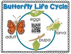 Augmented Reality Butterfly Life Cycle FREEBIE - this is a new kind of cool! Kind of like QR codes but even better!