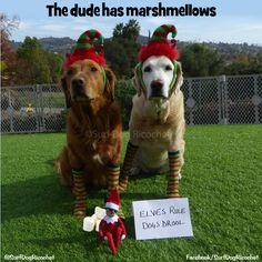 The dude bribed us with marshmellows #elfontheshelf #elfontheshelfideas #elfontheshelf2016 #elfontheshelf2015 #elf #dogs #funny