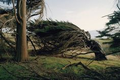 slope point, the southernmost tip on new zealand's south island, is hit with such persistently violent northern antarctic winds that trees grow in the windward direction.