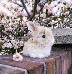 Cute rabbit photography,House Ears Pets White Sketch Cute Funny Cartoon Names Lionhead Run Watercolour Mini Lop Indoor Black Pattern Rabbit Life, House Rabbit, Pet Rabbit, Rabbit Duck, Cute Baby Bunnies, Cute Baby Animals, Cute Babies, Small Animals, Adorable Kittens