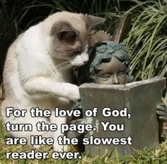 Funny cat pic with caption. For more cats funny pics visit www.bestfunnyjokes4u.com/funny-cat-pics/