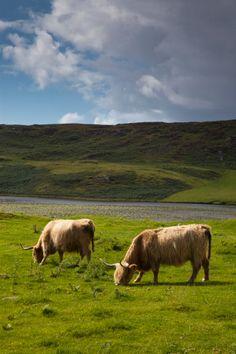 Glen Nevis, Lochaber, Highland, Scotland.                              …