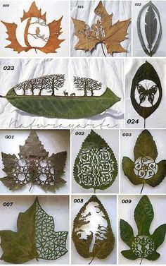 Designs cut into leafs. These are amazing!