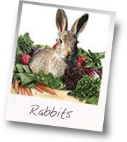 rabbit control, trapping rabbits, traps for trapping rabbits