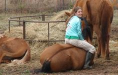 What You Need To Know BEFORE You Buy A Horse