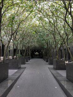 puristischer Garten mit eine Reihe von Bäume in Betten in grüner Farbe