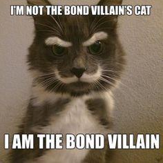 Dr. Meow