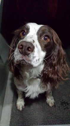 NS PoliceDogs (@NSPoliceDogs) | Twitter   User Actions    Following   NS PoliceDogs @NSPoliceDogs Zuma called in after a male ran from police in Bury, during search locating several wraps of class A #NosePower  RETWEETS 4 LIKES 54 Sue converyKathy NewsonChris DoylesammySue BAnne Mountifieldniomi tyelouisa fouldsDanielle H 2:10 AM - 30 Apr 2016  Reply   Retweet     Like   More   Tweet text   Reply to @NSPoliceDogs     Smiffy @Tigereel  Apr 30 @NSPoliceDogs Well done PD Zuma! Great work…