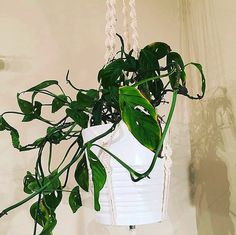 Thank you for sharing ! - The S u s a n looks fantastic in your home 🌱😍 . Macrame, Plant Leaves, Plants, Instagram, Plant, Planets
