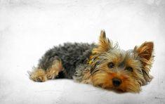 Hat Dein Hund Langeweile? Passiert das mal, ist es okay. Passiert es oft, solltest Du etwas tun, bevor er selbst etwas dagegen tut - denn das ist selten gut