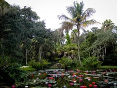 plenty to do, whether you're the outdoorsy type or you prefer artsy entertainment. One of Florida's most beautiful historic gardens, McKee Botanical Garden, is right here in Vero Beach. Florida Treasure Coast, Vero Beach Florida, South Florida, Places In Florida, Florida Gardening, Lily Pond, Florida Travel, Botanical Gardens, Beautiful Gardens