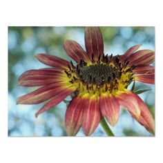 Happy Red Sunflower poster from Zazzle.com