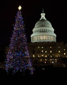 The official lighting of the U.S. Capitol Christmas tree in Washington, DC takes place in early December. (Evan Vucci / AP)