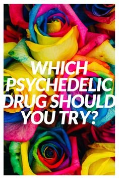 Which psychedelic should you try?