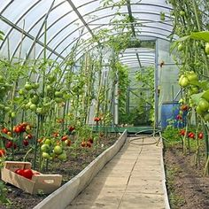 5 Considerations for Year-Round Greenhouse Growing - Organic Gardening - MOTHER EARTH NEWS