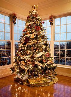 Weihnachtsbaum-Licht