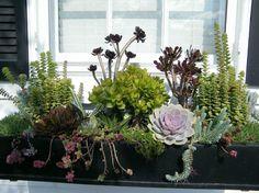 bac à fleurs avec des plantes succulentes sur le rebord de la fenêtre