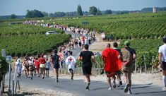Learn more about the Le Marathon du Médoc in France on Sep 15 2018 that offers Marathon or less. Be part of the race! Elba, Travel Bugs, Marathon Training, Amazing Destinations, Logs, Trip Planning, Countryside, Dolores Park, Scenery