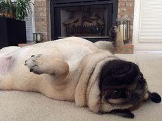 Waffles: Please rub my belly... Pretty please...?