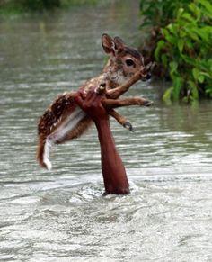 心打たれる…動物を助けるために奮闘する人々の写真20枚 http://labaq.com/archives/51819179.html
