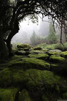 Via My inner landscape. Misty morning