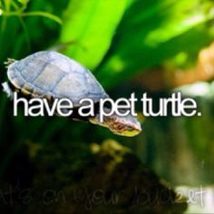 ✔ Have a pet turtle- {Bucket List} ✔  I had two pet turtles during elementary school. They ate pizza (like TMNT) and sausages :)