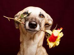 Beautiful Pets! #ValentineDay #BeBine #Love