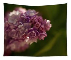 Divine lilac, it's beauty only rivaled by it's beautiful scent Wall Tapestries, Tapestry, Let It Bleed, My Favourite Subject, Wall Spaces, Basic Colors, How To Be Outgoing, Color Show, Beautiful Images