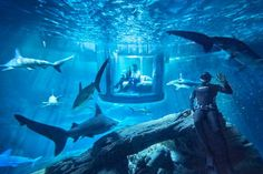 Airbnb have a competition going on right now to win a two-night stay in an underwater room surrounded by sharks. Located at L'Aquarium de Paris, the underwater room has a 360 degree view [. Under The Water, Under The Sea, Aquariums, Underwater Bedroom, Shark Bedroom, Mermaid Bedroom, Sleep With The Fishes, The Places Youll Go, Places To Go