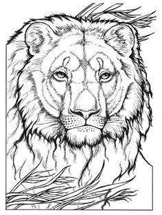 Creative Haven Wild Animal Portraits, Dover Publications