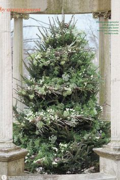 Christmas tree garlanded with grevellea and cedar boughs, Queen Anne's lace, chamomile, and bird's nests. Lovely for outside tree. Christmas Tree Garland, Decoration Christmas, Beautiful Christmas Trees, Natural Christmas, Noel Christmas, Green Christmas, Decoration Table, All Things Christmas, Winter Christmas