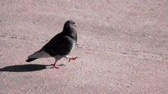 Así con las palomas que marchan