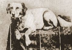 Many people don't know that Abraham Lincoln and his family owned a pet dog while they lived in Springfield, Illinois. Fido was born in circa 1855.