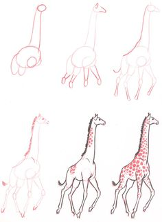 Learn to draw: Giraffe