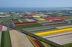 Tulpenfelder aus der Vogelperspektive   KlonBlog