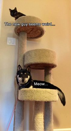 The new guy seems weird... Meow...