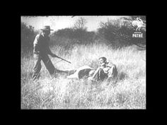Lion v Man. Upsetting hunting scenes from 1955 in South Africa: http://youtu.be/vbhU76kUGMM