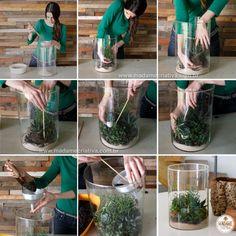 Como fazer um terrário - Mini-jardim dentro de pote de vidro