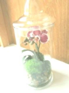 mini orchid terrarium Decide which types of plants will be able to co-exist with faqen time Orchid Terrarium, Small Terrarium, Phalaenopsis Orchid, Orchids, Orchid Plants, Types Of Plants, Begonia, Art Club, Swag Nails